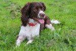Raw Pet Feeding Supplies Cwmbran