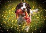 dog raw feeding np44