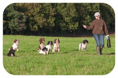 dog trainer cwmbran pontypool