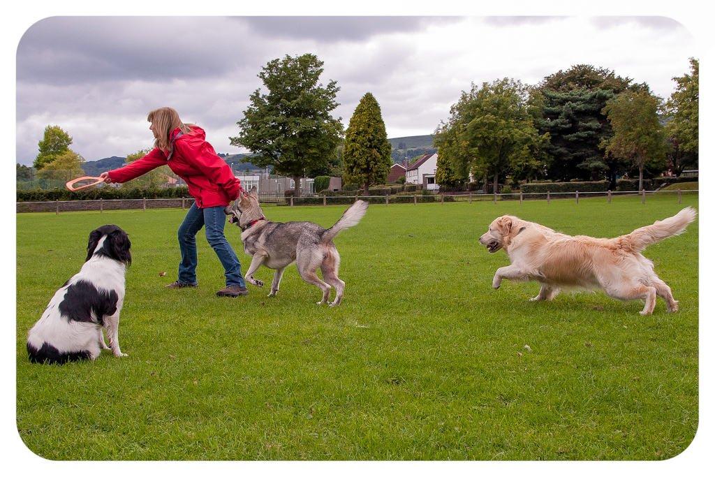 dog walker np20